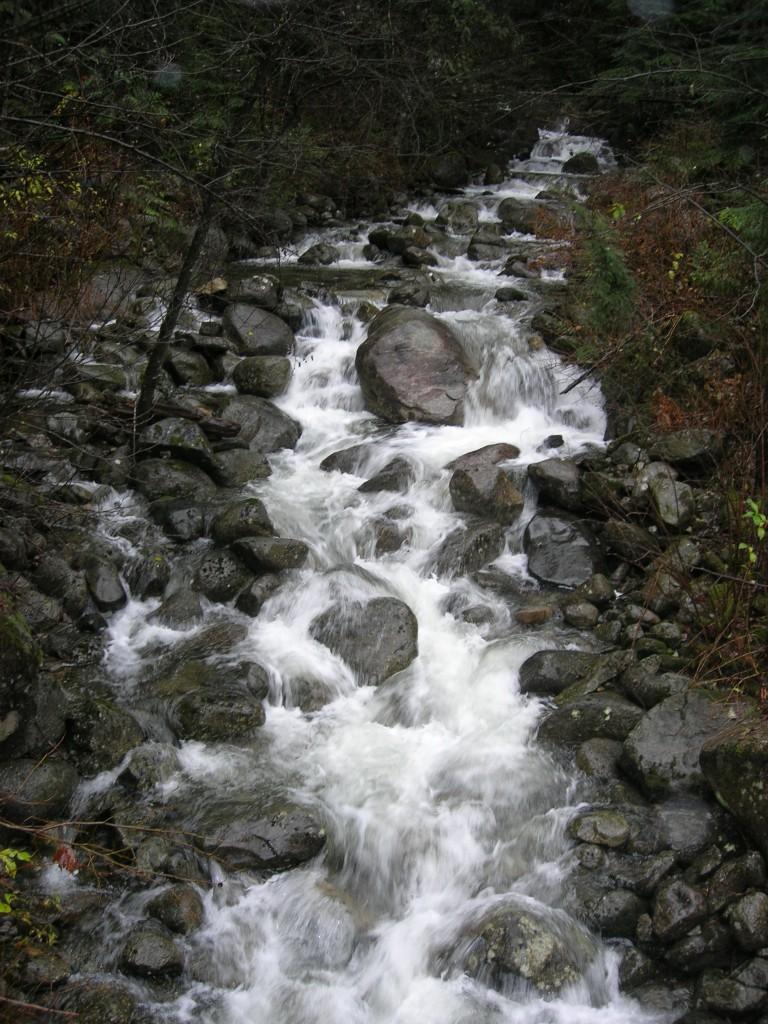 Mayfly Creek MKRF Nov 2009